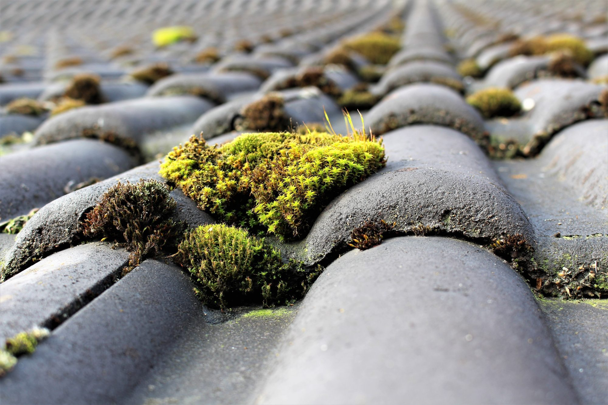 Roof Cleaning: How to Kill Moss & Algae and Ways to Prevent Them